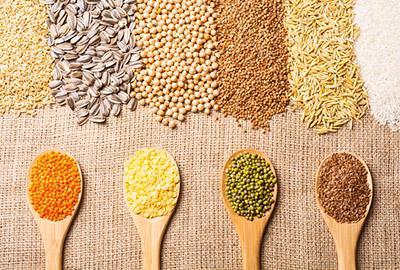 Elementa - Organic plant proteins